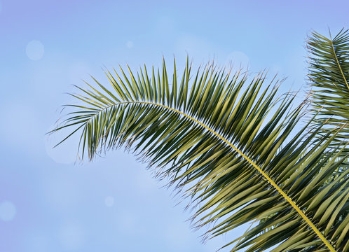 Palm leaf against blue sky with blurred bokeh Holy Week Easter concept Long weekend spring break