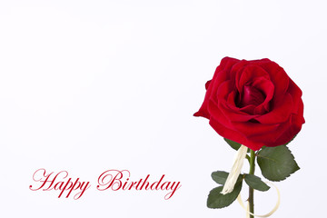 Birthday card with beautyful red rose on the white empty background