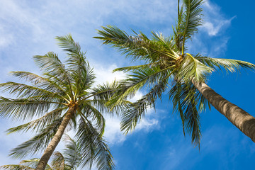 Summer nature scene palm trees with blue sky