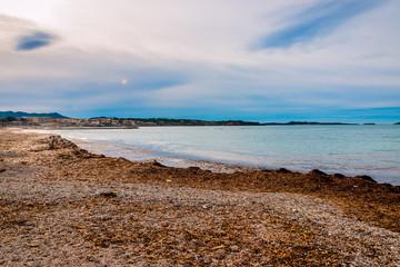 Posidonie sur la plage de la Coudoulière à Six-Fours-les-Plages