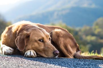 Pies na zewnątrz
