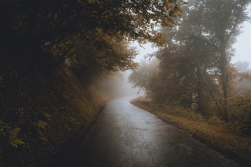 View of empty road passing through foggy forest