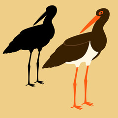 black stork vector illustration flat style  silhouette black profile