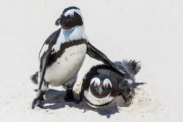 Pinguine haben sich lieb