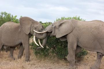 Elephant Play