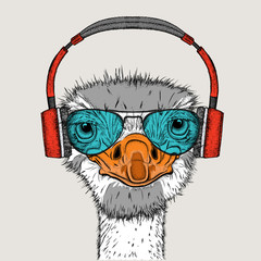 Portrait of an ostrich in headphones. Can be used for printing on T-shirts, flyers, etc. Vector illustration