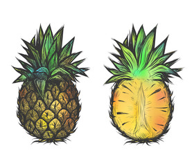 Hand drawn vector illustration of pineapple. Colorful design for t-shirt.