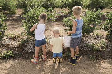 Rear view of siblings standing by plants in farm