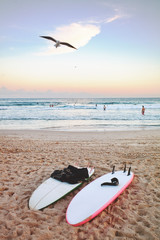 Surfboards lay on the sand at Bondi beach , while a seagull flies in the pink sunset sky, Sydney Australia.