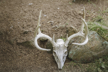 High angle view of animal skull on field