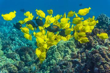 School of Fish on Reef