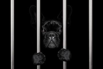 dog behind bars in jail prison