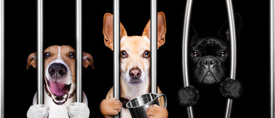 dogs behind bars in jail prison