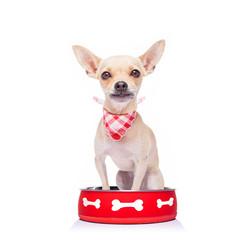hungry dog inside food bowl