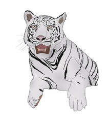 White tiger in sitdown action digital painting