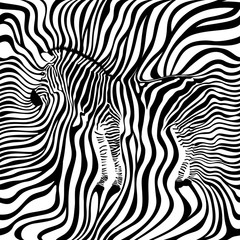 Zebra seamless pattern. Animal skin print texture background. Black and white, wild animal. design trendy fabric,  vector illustration.