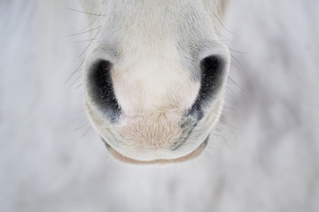 Horse Nose Close Up