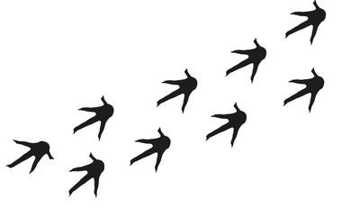Rooster Foot print wallpaper silhouette, Chicken Walking Foot print vector