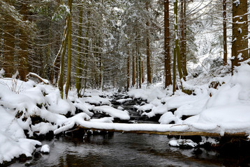 Winter creek in the National park Sumava, Czech Republic.