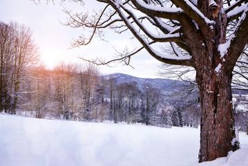 Tree in snowy winter landscape. National park Sumava in Czech Republic.