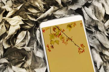 Smartphone on dry leaves