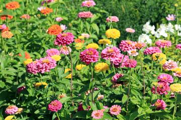 bright flower-bed