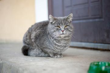 Кот с миской