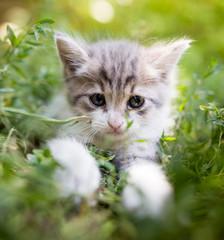 Mała figlarka w zielonej trawie w parku