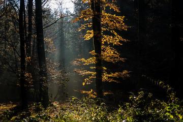 Herbstwald mit Sonneneinstrahlung