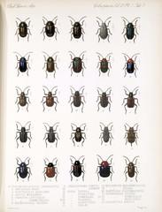 Illustration of beetles