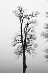 Tree silhouette in flooded field