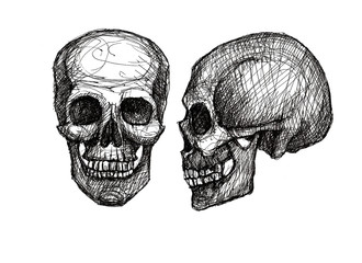 human skull, black and white illustration