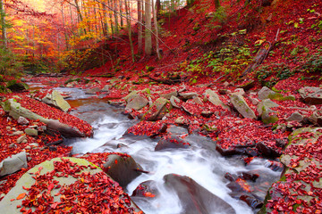 Stream in autumn beech forest