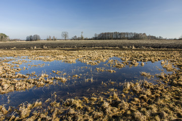 Marshy meadow, a plowed field and a small forest against the sky