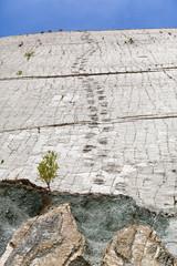 Real dinosaur footprint imprinted in the rock. Nacional Park in Sucre, Bolivia
