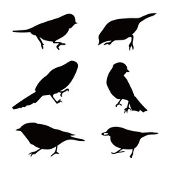 birds silhouette set. Realistic vector art