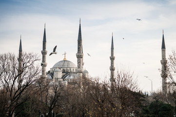 Blue Mosque Istanbul, with flying birds in evening and tree