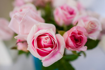 Wall Mural - Bouquet of roses Pink Background blur Valentine