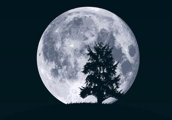 lune - clair de lune - paysage - arbre - sapin - fond - ciel - rêve - nuit - nocturne - hibou