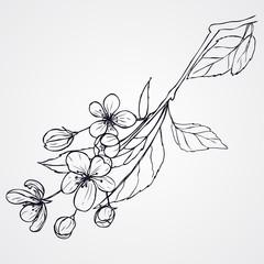 hand-drawn cherry blossom