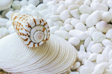 One sea shell