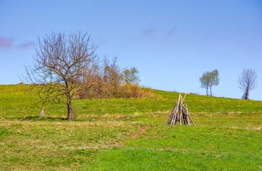 tree on the grassy hillside. springtime in rural area