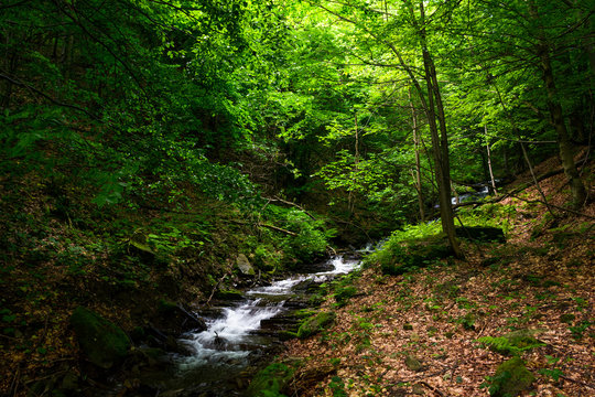small rapid brook in green forest. beautiful nature background in summertime
