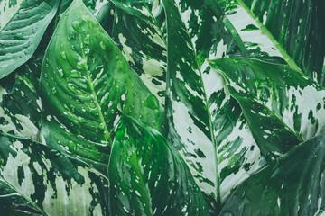 Ornamentacyjna roślina, Świeży tropikalny zieleń opuszcza tło