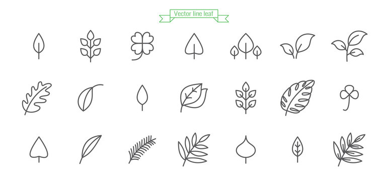 Leaf, foliage, line, icon, thin, simple, vector, set