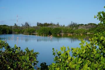 Flamingos in einer Lagune auf Cayo Coco, Jardines Del Rey, Kuba | Karibik