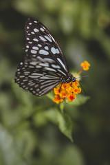 orange flower butterfly
