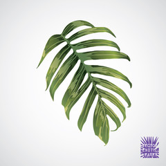 Vector green palm leaf.