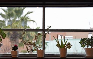 Sukkulenten in Blumentöpfen auf einer Fensterbank