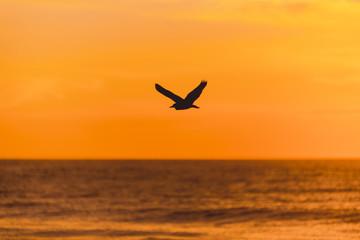 Bird flying on the sunrise